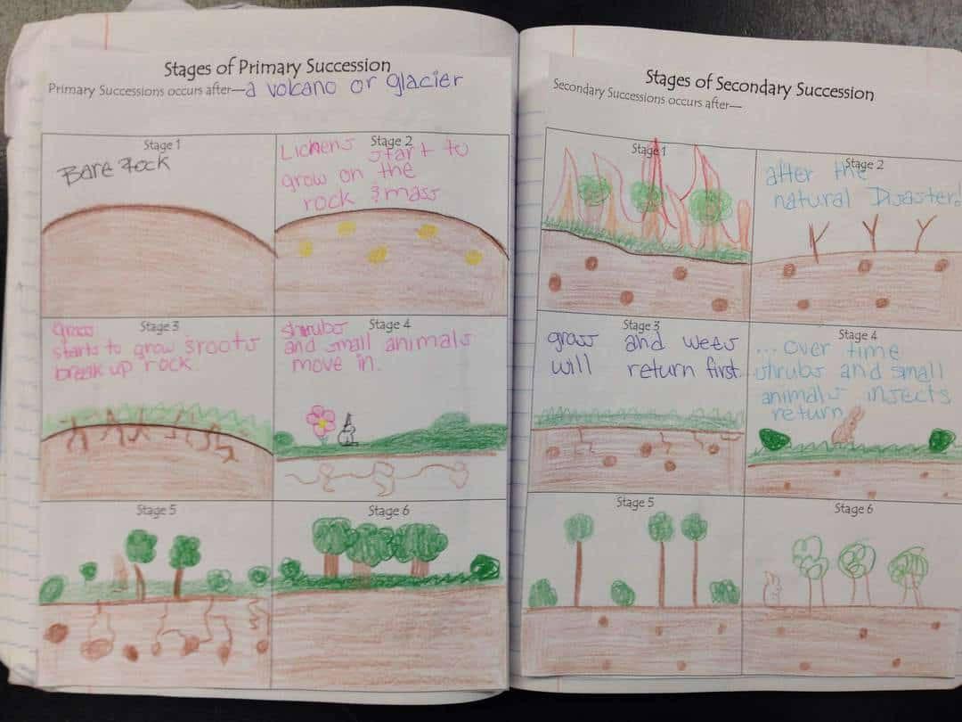Primary and Secondary Succession Picture Notes | Kesler Science