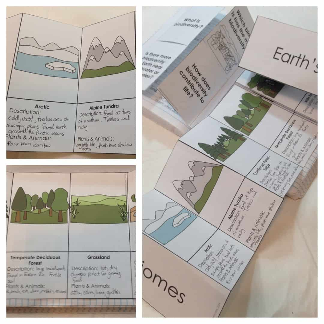 ecosystem brochure template - interactions in an ecosystem interactive notebook pages