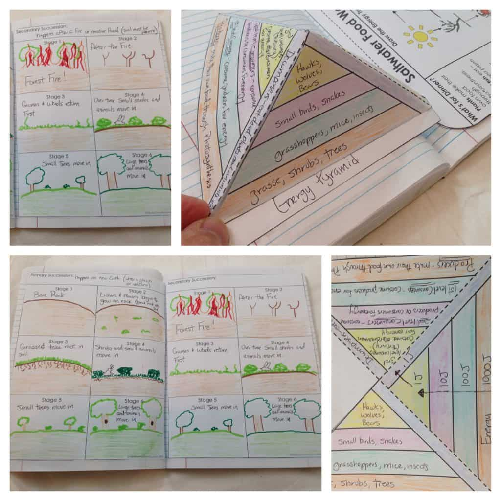 Primary and Secondary Sucessions and Energy Pyramid Templates