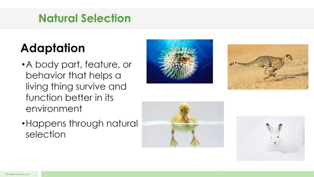 Natural Selection Lesson Plan A Complete Science Lesson
