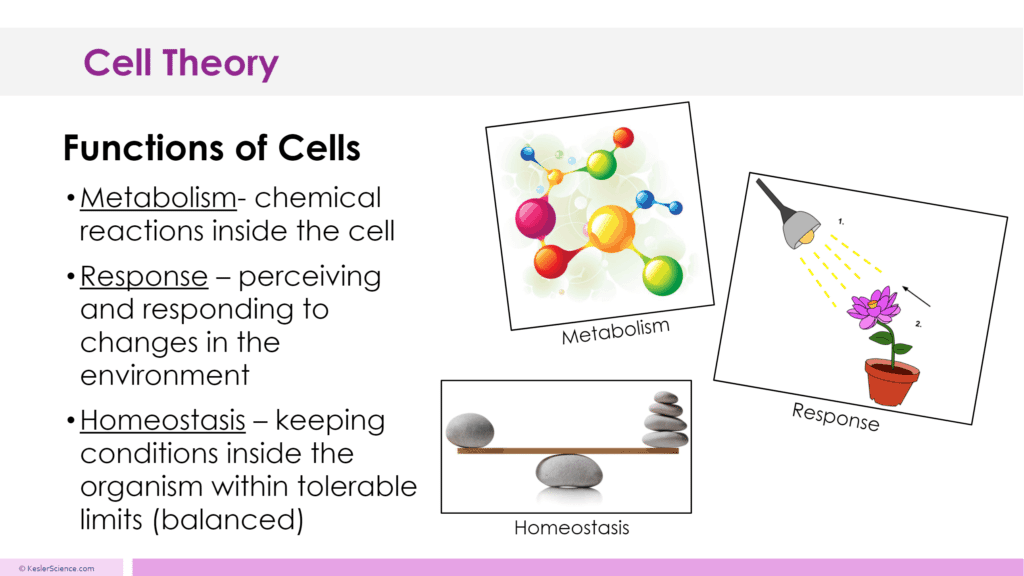 CELL THEORY LESSON PLAN – A COMPLETE SCIENCE LESSON USING