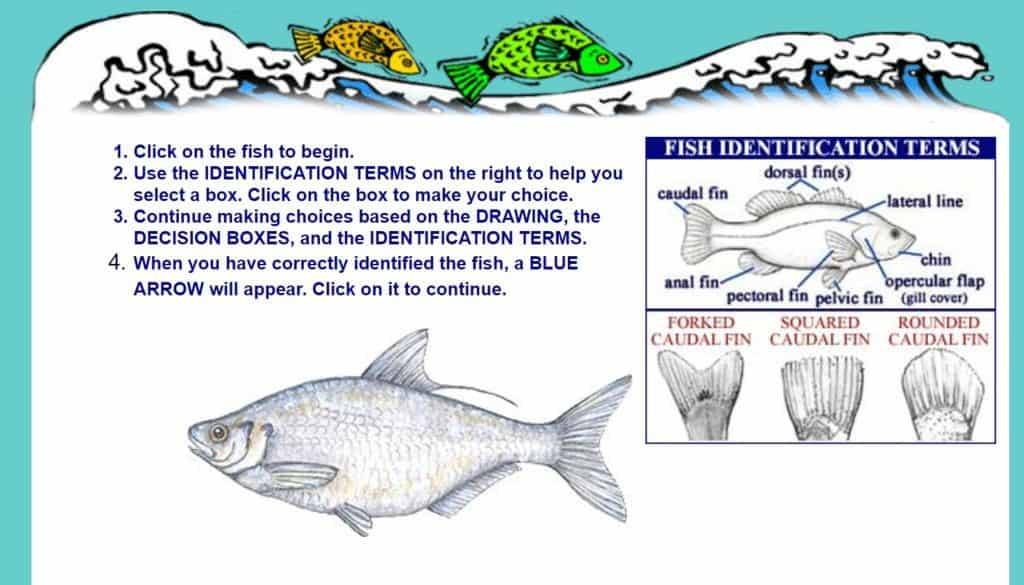 Dichotomous Key Flashcards   Quizlet furthermore Key Worksheets Answers Fish Dichotomous Key Answers  Dichotomous Key likewise Clification and Keying additionally  together with Guide To The Coastal Marine Fishes of California additionally Saler Fishes of Texas also Fish Dichotomous Key also Shark Dichotomous Key as well Nogales High together with Copy Of Clification And Dichotomous Keys   Lessons   Tes Teach additionally Fish Dichotomous Key further taxonomy clification and dichotomous keys – briannakidd club also Printable dichotomous key worksheet likewise Dichotomous Keys   Grade 11 University Biology together with DICHOTOMOUS KEYS LESSON PLAN – A  PLETE SCIENCE LESSON USING THE also What's that fish  The  dichotomous  key to fish identification   MSU. on fish dichotomous key worksheet answers