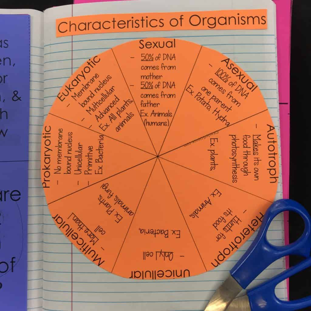 CHARACTERISTICS OF ORGANISMS LESSON PLAN - A COMPLETE ...