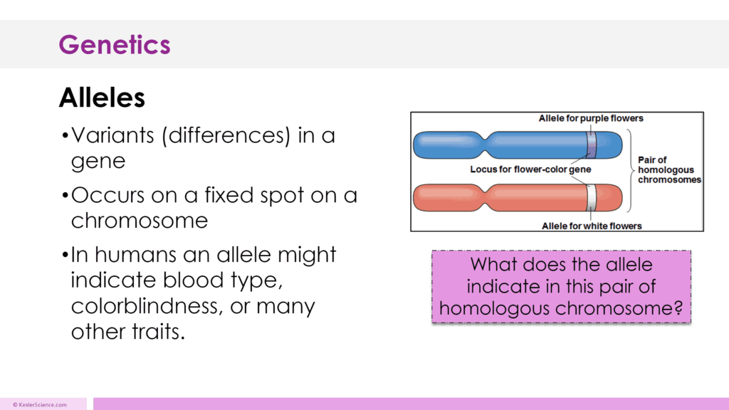 Genetics Lesson Plan A Complete Science Lesson Using The 5e Method