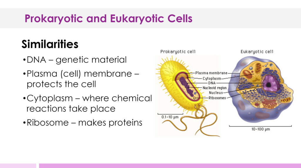 Prokaryotic And Eukaryotic Cells Lesson Plan A Complete Science