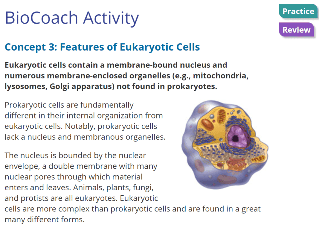 PROKARYOTIC AND EUKARYOTIC CELLS LESSON PLAN A COMPLETE SCIENCE – Prokaryotic and Eukaryotic Cells Worksheet