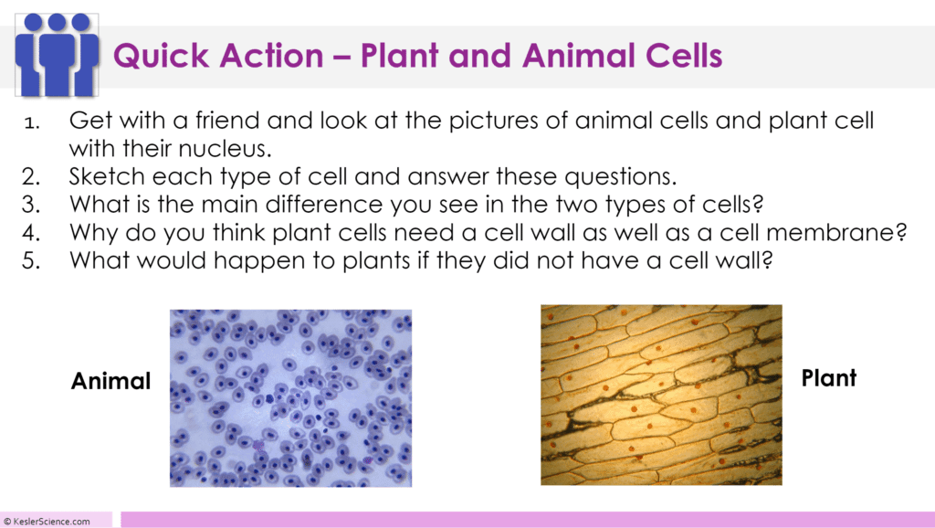 Plant and Animal Cells 5E Lesson