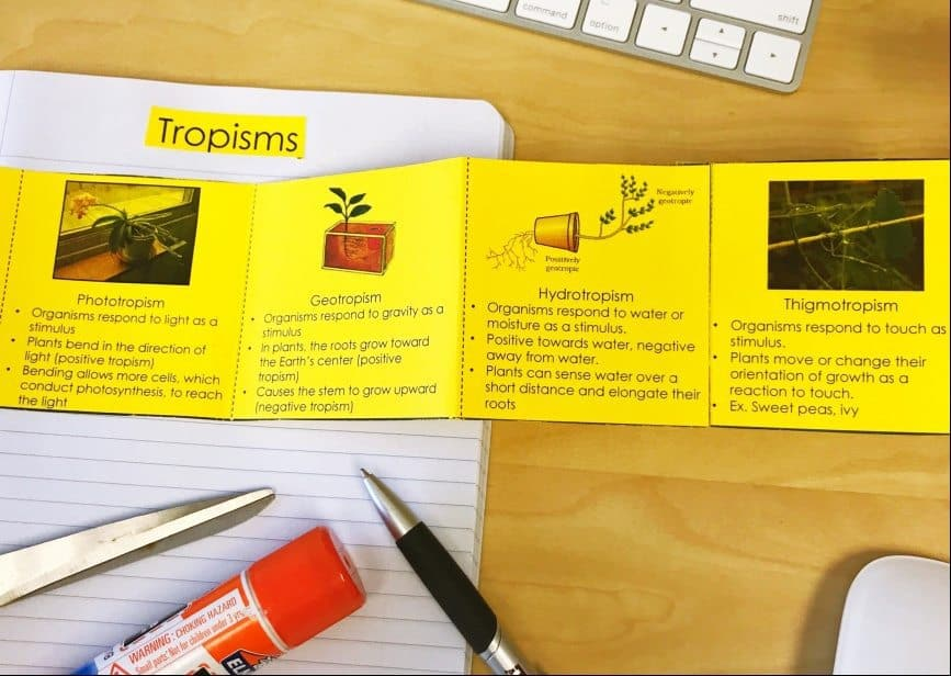 Tropisms and Turgor Pressure 5E Lesson
