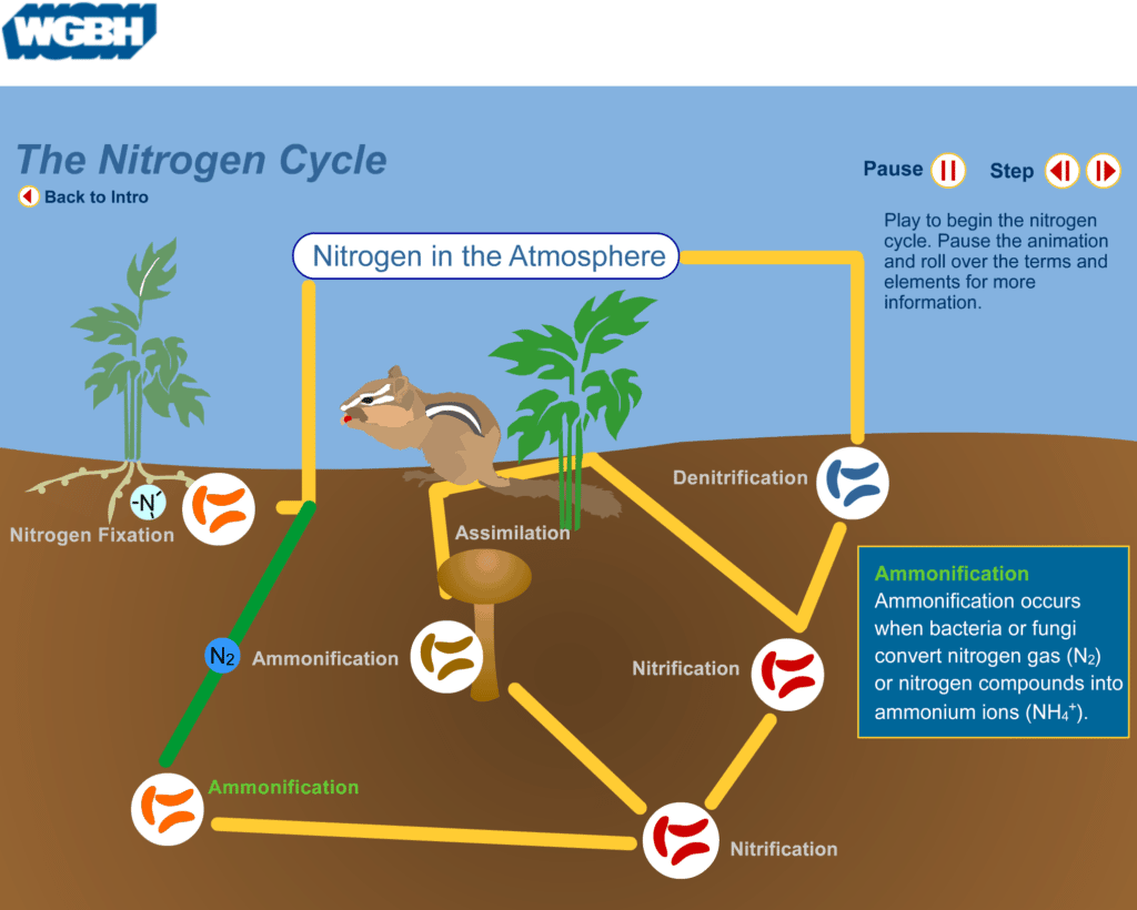 Nitrogen Cycle Lesson Plan  U2013 A Complete Science Lesson